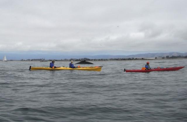 Photo courtesy Dave Johnston, Venture Quest Kayaking